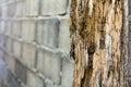 Termites Erosion