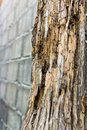Termites erosion pole decay from destroy a brick wall in the background Royalty Free Stock Images