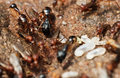 Termites and flying ants Royalty Free Stock Photo