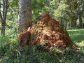 Termites nest a queen elizabeth national park uganda africa Stock Photo