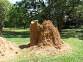 Termites nest a queen elizabeth national park uganda africa Royalty Free Stock Images