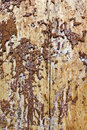 Termites work result bark of a pine was eaten by larvae of a bug of the bark beetle background Stock Image