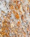 Termitu gniazdeczko na barkentynie Zdjęcie Royalty Free