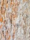 Termitu gniazdeczko na barkentynie Obraz Royalty Free