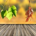 Terrace floor in vineyard wooden with view to dead and alive leaves Stock Photography