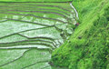 Terrace Paddy field Royalty Free Stock Photo