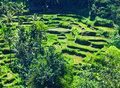 Terrace rice fields bali indonesia Stock Photo