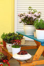 Terrace or roof gardening Royalty Free Stock Images