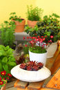Terrace or roof gardening Stock Images