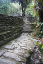 Terrace s ciudad perdida lost city columbia steps leading up to a in the in the sierra nevada mountains this site was found in and Royalty Free Stock Photo