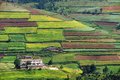 Terraced fields Royalty Free Stock Photo