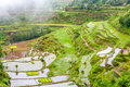 Terraced fields in banaue region Royalty Free Stock Images