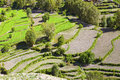 Terraced fields a close up of terraces tibet in china Stock Photo