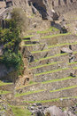 Terraced fields and guardian huts Royalty Free Stock Photography