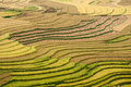 Terraced fields, Yen Bai province, Vietnam Royalty Free Stock Photos