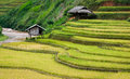 Terraced fields, Yen Bai province, Vietnam Royalty Free Stock Photography