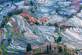 Terraced fields in yunnan scenery yuan yang county of province are all within the territory of mountains all built on the hillside Royalty Free Stock Photo