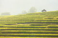 Terraced rice field Stock Images