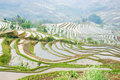 Terraced rice field beautiful in yunnan china Stock Image