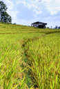 Terraced rice field with cottage at Ban Pa Bong Piang, Chiang Mai in Thailand Royalty Free Stock Photo