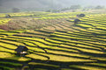 Terraced rice field and hut on Mountain Stock Photos