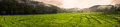 Terraced rice field in the morning panorama view Stock Photo