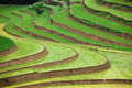 Terraced rice fields Royalty Free Stock Photography