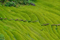 Terraced rice fields himalayas nepal green Stock Images