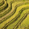 Terraced rice fields near Guilin, Royalty Free Stock Photo