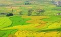 Terraced rice fields ready harvesting in Yen Bai, Vietnam Royalty Free Stock Photo
