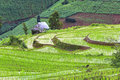 Terraced rice fields in thailand Royalty Free Stock Photos