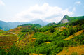 Terraced rice fields in vietnam southeast asia beauty landscapes Royalty Free Stock Images