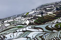 Terraced rice fields in water season in Yunnan province, China. Royalty Free Stock Photo