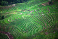 Terraced rice fields in yuanyang county yunnan china green lies at an altitude ranging from along the red river up to nearly Stock Photo