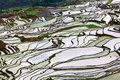 Terraced rice fields in yuanyang county yunnan china lies at an altitude ranging from along the red river up to nearly metres Stock Image