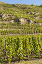 Terraced Vineyard of Ampuis Royalty Free Stock Photo