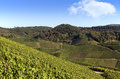 Terraced winegrowing area Royalty Free Stock Images