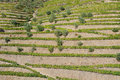 Terraces in douro valley the made ​​by man Stock Photo