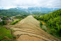 Terraces rice cultivation in the mountains Royalty Free Stock Images