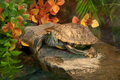 Terrapin water lie on isle in aquarium Stock Photo