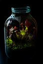 Terrarium made in a jar with carnivore plants Royalty Free Stock Photo