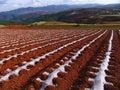 Terreno rosso del Yunnan asciutto Fotografie Stock