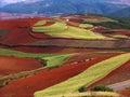 Terreno rosso del Yunnan asciutto Fotografie Stock Libere da Diritti