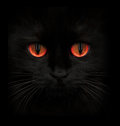 Terrible muzzle of a black cat with red eyes Royalty Free Stock Photo