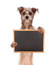 Terrier mix dog holding blank chalkboard a cute scruffy mixed breed standing up and a sign enter your own message using chalk font Stock Photo