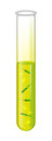 Test tube with liquid and yellow bacteria cell. Vector.