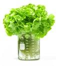 Testing Hydroponic Lettuce Beaker Food Stock Images