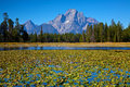 Tetons at Oxbow Bend Royalty Free Stock Photography