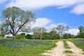 Texas bluebonnet vista along country road Royalty Free Stock Photo