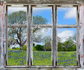 Texas bluebonnets vista through an old window frame
